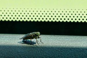 insecto en tu coche